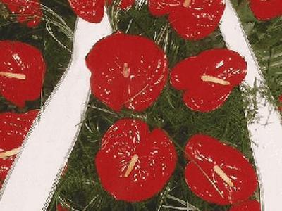 wieniec z dużymi czerwonymi kwiatami